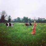 Хейли Беннетт и коровы