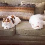 Кошки Хейли Беннетт