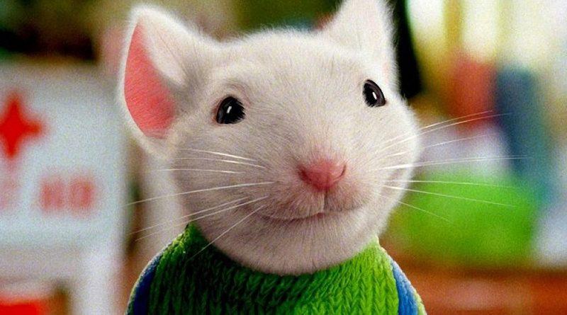 Нельзя остаться равнодушным: 7 трогательных фильмов о дружбе детей и животных
